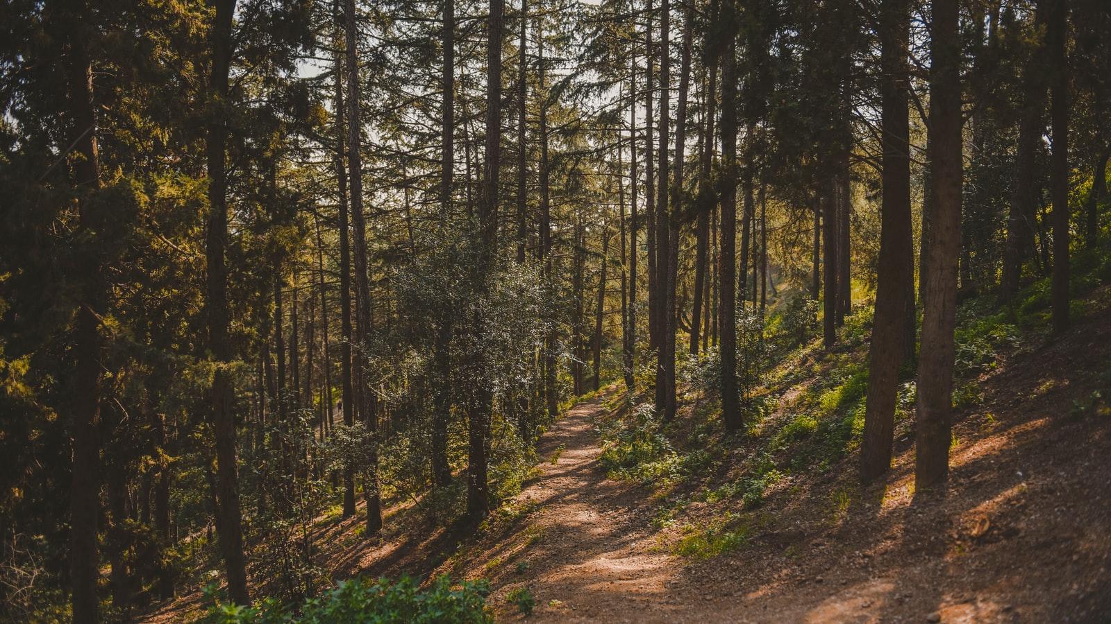 Metsä alt